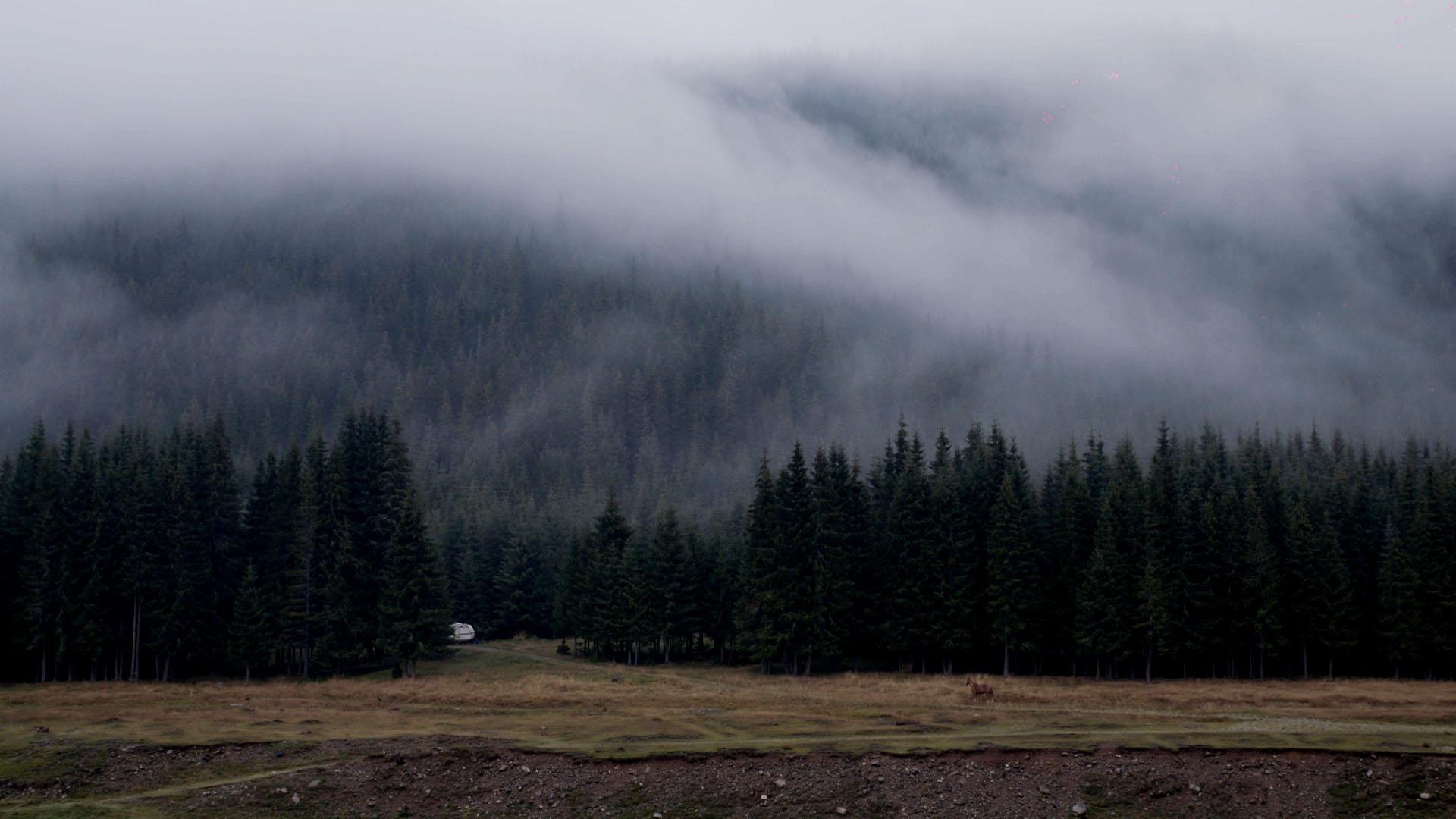 Pferd totale nebel